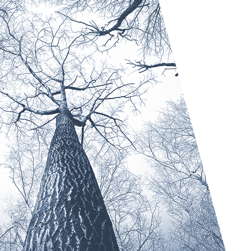 Bravr SEO service background image of abstract tree