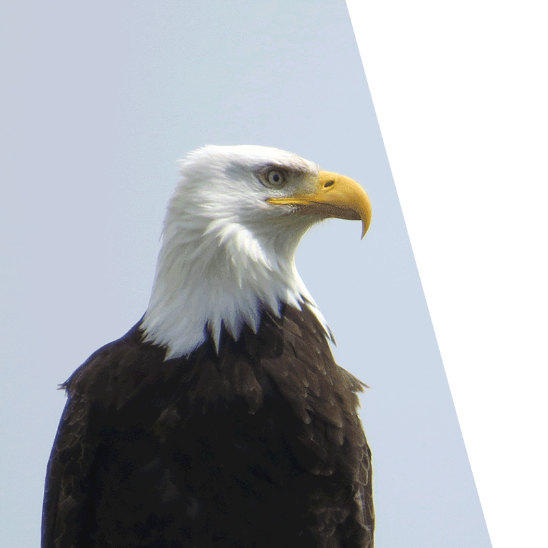 eagle looking - search engine optimisation