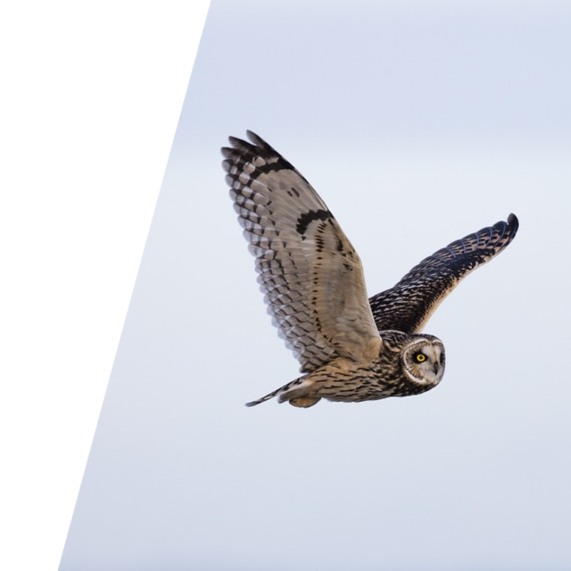 Image of flying owl on PPC services