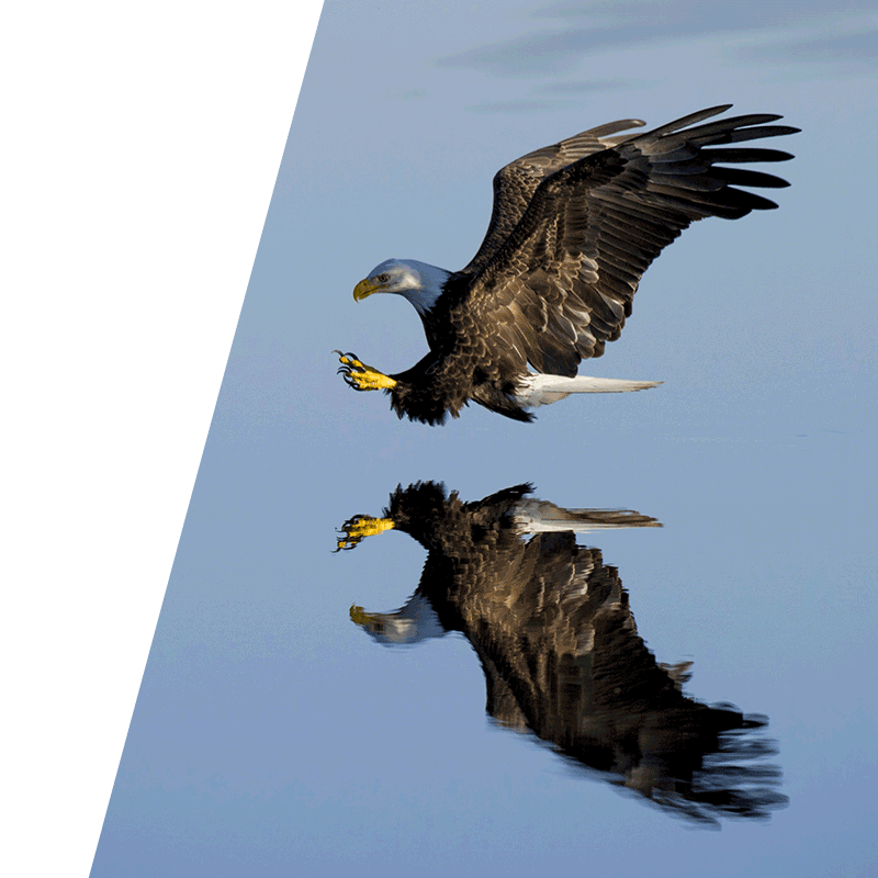 eagle flying close to water